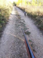 Perro y escopeta