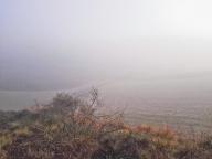 Niebla caza